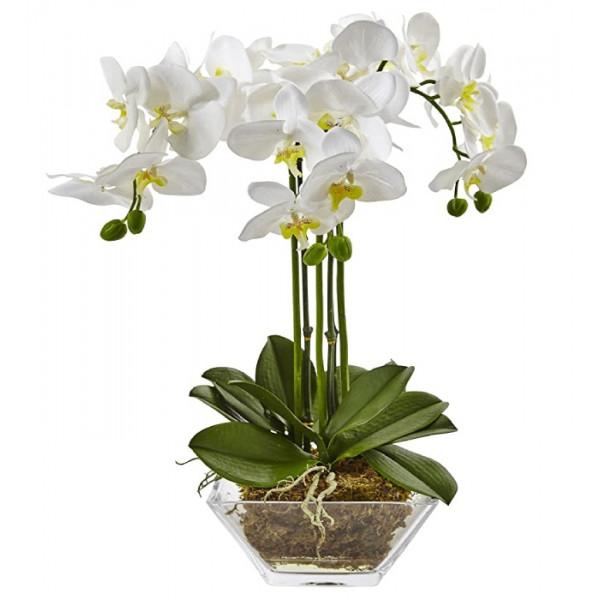 Hoa lan hồ điệp trắng loại 3 cây WS0003
