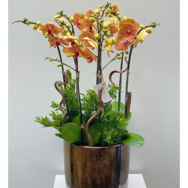 Hoa lan hồ điệp vàng loại 6 cây - YS0002