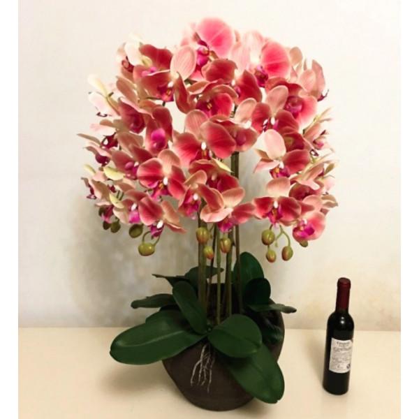 Hoa lan hồ điệp trắng hồng loại 8 cây WPS0001